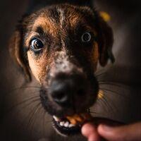 Doggbone