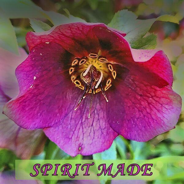 Cover art for Spirit Made