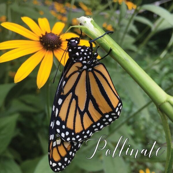 Cover art for Pollinate