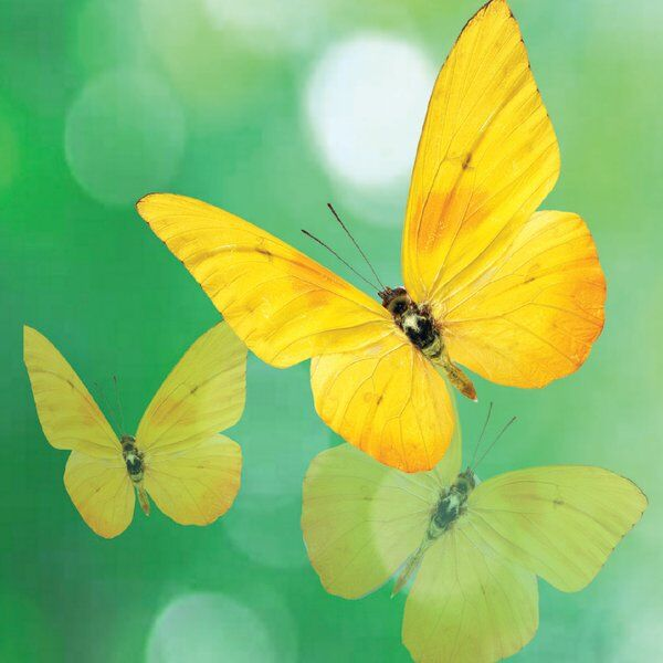 Cover art for Goodbye Yellow Butterfly